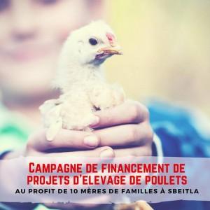 Soutien Micro-projets d'élevage de poulets fermiers bio pour des femmes à Jendouba et Kasserine